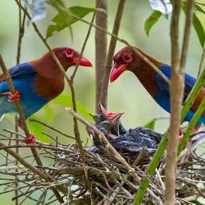 Sinharaja Rain Forest - 4restlankatours